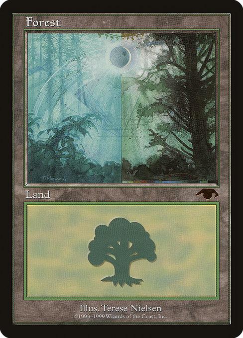 MTG Guru Forest